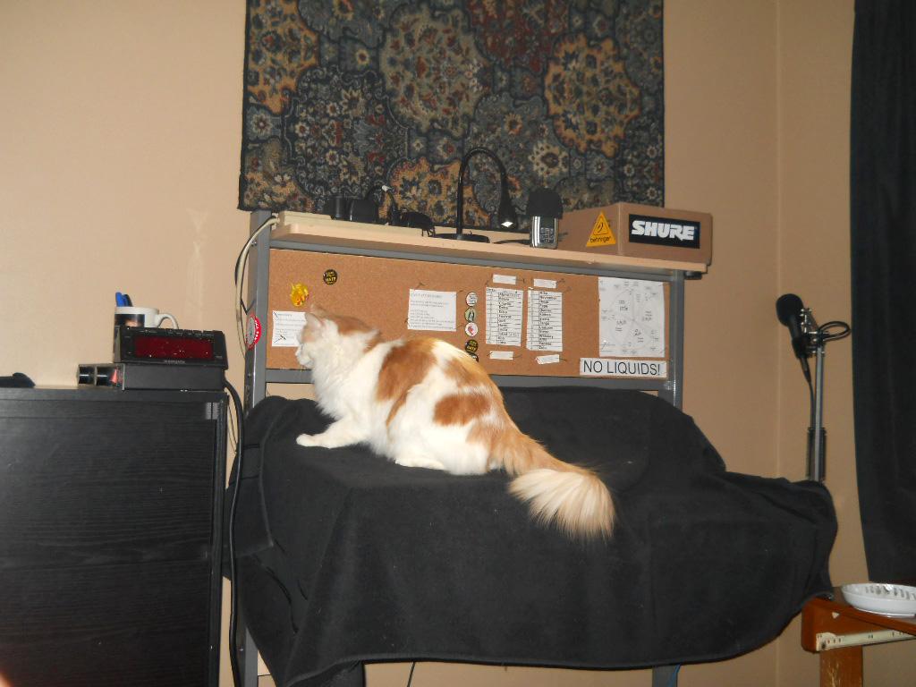 Dog Scratching Carpet Images Amazon Heuga Carpet Tiles Vidalondon How To Keep Cats Off